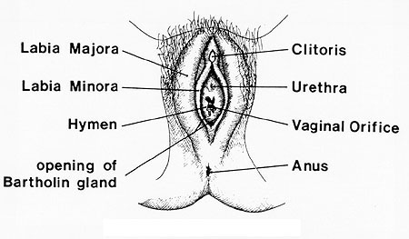 human reproduction images